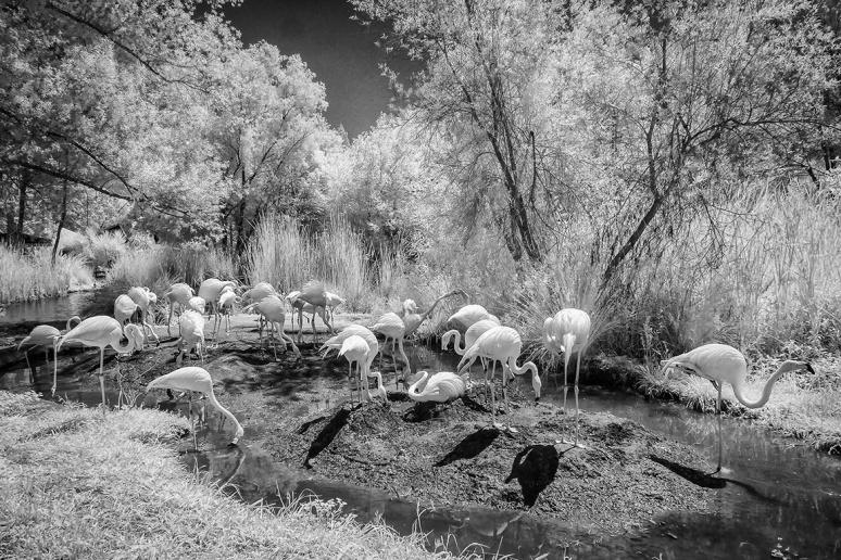 IR Flamingos v2